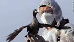 gripa aviara - ziare com.jpg